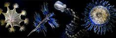 La salle Blaschka du Muséum de Genève propose aux visiteurs d'étonnants modèles en verre d'organismes marins créés à la fin du 19e siècle par Léopold et Rudolf Blaschka, les célèbres verriers de Dresde. Mélanges d'art et de science, ces oeuvres d'une fragilité extrême reproduisent des méduses, des mollusques et d'autres organismes marins, avec un réalisme époustouflant.