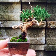 Minis, Mini Bonsai, Planter Pots