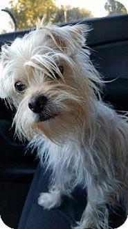 Loxahatchee, FL - Terrier (Unknown Type, Small) Mix. Meet Rain, a dog for adoption. http://www.adoptapet.com/pet/17082910-loxahatchee-florida-terrier-unknown-type-small-mix