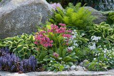 Moist shade garden: Primula japonica, Ajuga reptans (carpet bugle), Hosta, Phlox divaricata