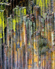 Lichen-covered columnar basalt formation, Umpqua National Forest, Oregon by Danita Delimont Patterns In Nature, Textures Patterns, Nature Pattern, Basalt Columns, Oregon, Rock Formations, Rocks And Minerals, Crystals Minerals, Texture Art