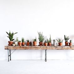 Cacti on point � #cactus #cactuslover #cacti #cactilove #plantsofinstagram #plants #plant #pottedplants #pottedplant #interior #interiordesign #designer #white #green #greenery #bench #brownbench #vintage #vintageinterior #vintageinteriors #black #botanic #botanical #botanicinterior #letsgoallbotanical