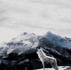 the twilight saga ; Ygritte And Jon Snow, Yennefer Of Vengerberg, She Wolf, House Stark, Throne Of Glass, Character Aesthetic, Arya Stark Aesthetic, Viking Aesthetic, The Witcher