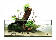 Favourites: Genesis by Dendroacua Nice shallow tank using wabikusas and aerial plants. More pictures and information here.