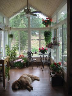 This is an Idyllic Sunroom! (Puppy not included!)