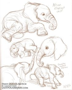 40 Free & Easy Animal Sketch Drawing Ideas & Inspiration - Elefanten - Home Easy Sketches, Art Drawings Sketches, Sketch Drawing, Drawing Ideas, Disney Drawings, Animal Sketches Easy, Tattoo Sketches, Tattoo Drawings, Drawing Tutorials