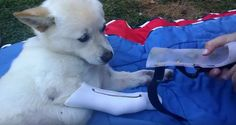 A rescued puppy saved from a fire gets her first pair of custom leg braces.
