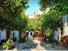 patio of oranges in seville - Google Search