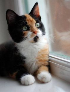 Calico sitting by the window!