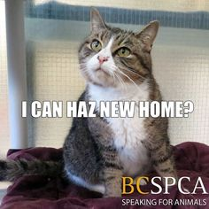 THE DAVINCI FOUNDATION FOR ANIMALS RESCUE ACROSS THE NATION/GLOBALRescue Info:CANADA, Vancouver Jackie is just one of the many cats looking for their forever home. Meet her at the BC SPCA West Vancouver Branch. #itscoldoutside Ready to adopt? Our current adoption promotion helps you double the love in your house, for half the price!