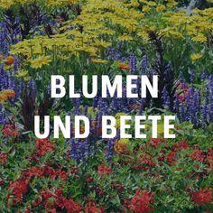 36 besten blumen und beete bilder auf pinterest in 2018 landscaping backyard patio und edible. Black Bedroom Furniture Sets. Home Design Ideas