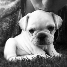 Puppy by Vegas