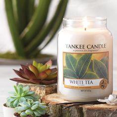 Woodwick Petite Candle-Blanco Té /& Jazmín