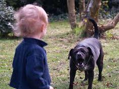 Adiestramiento Canino y Pension Canina Sin Jaulas:  El momento de tomar medidas es ya, estamos para a...