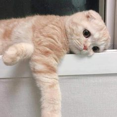 Discovered by 𝑀𝒶𝓂𝒾 𝒬𝓊𝑒𝑒𝓃. Find images and videos about cute, cat and cute cuteness on We Heart It - the app to get lost in what you love. Cute Baby Cats, Cute Little Animals, Cute Cats And Kittens, Cute Funny Animals, Funny Animal Pictures, I Love Cats, Kittens Cutest, Funny Cats, Cute Cat Memes