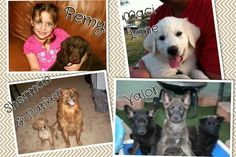 Some of the victims of Green Acre as pups...
