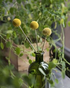 This bouquet spotlights billy buttons, a quirky yellow plant from the daisy family.