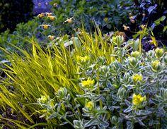 Nyanser av gröntFlera gröna nyanser hittar di i Blommig FredadHa det gott!