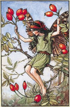 Cicely Mary Barker (1895-1973). Illustration of the Rose Hip Fairy for Flower Fairies of the Autumn, 1926.Reproduction of Flower Fairy illustrations, © The Estate of Cicely Mary Barker, 2009