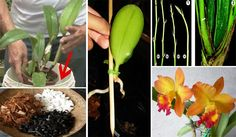 How To Keep Orchids Alive And Looking Gorgeous Plants, Container Plants, Veg Garden, Growing Plants, Plant Care, Orchids, Flowers, Orchidaceae, Wooden Plant Stands