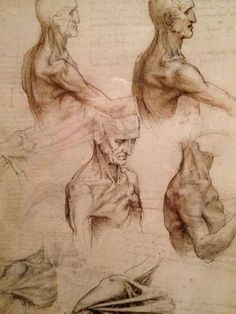 'Leonardo da Vinci: Anatomist'  He loved the study of the human body.  He asked to help a coroner dissect a body so that he could study the structure underneath the skin.  <3k<3