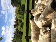 more sheep than people in NZ!