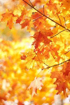 Autumn is near ~
