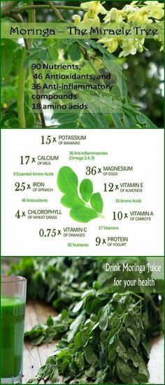 Moringa is very rich in minerals, proteins and vitamins and due to its content it offers numerous health benefits to our health. It is also abundant in folate and vitamins A, B1, B2, B3, B6, C. Als…
