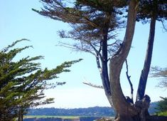 Monterey Peninsual on Via travel magazine Monterey Peninsula, Central California, Travel Magazines, Monterey Bay, Whale Watching, Travel Information, Bay Area, Coast, Plants