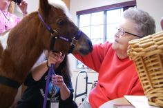 Northern Michigan In Focus Charlie The Miniature Therapy Horse