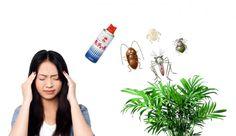 観葉植物に発生する虫トップ10を一瞬で全滅させる方法