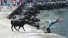 https://www.google.pt/search?q=touradas ilha terceira 2013