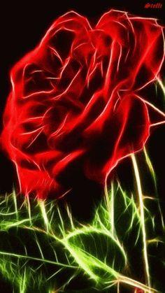 Decentes Recortes Image: Beautiful Roses 3