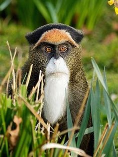 Top 27 Funny Monkey Pictures is part of Animals - Do you love monkeys, and you are sick of watching old pictures of monkeys on social media Well try these top 27 funny pictures of monkeys Monkeys are primates There are around 260 different spec… Amazing Animals, Interesting Animals, Unusual Animals, Rare Animals, Animals Beautiful, Animals And Pets, Funny Animals, Animals Planet, Strange Animals