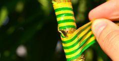 Altoirea de august a pomilor, în imagini pas cu pas | Paradis Verde