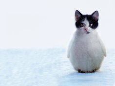 Photos of animal hybrids: If you could combine two animals, what would you combine and why?