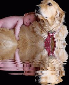 Beautiful Baby, Animated Animals, Animated Graphics, Animated Gif, Keefers gif by Keefers_   Photobucket