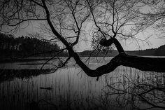 #tree_magic #magic_shots_ #beautiful_nature #tv_mist #landscape_captures #loves_trees_rural #fuji  #fujix100f  #fujifeed #fujifilm #bnw_greatshots #bnw_life #bnw_planet #bnwpoland #ig_energy_bw  #iphonex #iphoneography #photooftheday #bw_perfect #bnw_perfection #bnw_photography