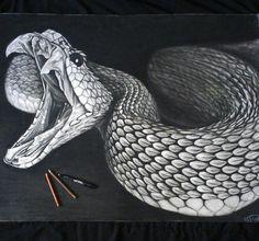 drawings of reptiles