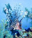 Lionfish jigsaw puzzle in Under the Sea puzzles on TheJigsawPuzzles.com