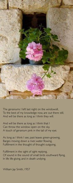 ¤ Poet Ponderings ¤ poetry, quotes & haiku - William Jay Smith | Geraniums