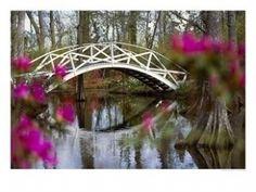 Magnolia Plantation and Gardens  Charleston, SC