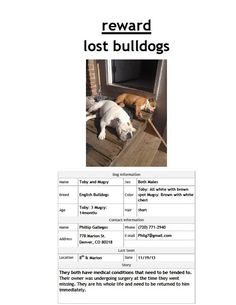 #LOSTDOGS 11-19-13 #DENVER #CO 8TH & MARION #ENGLISHBULLDOGS #BULLDOGS MALES TOBY: 3 YEAR OLD WHITE WITH A BROWN SPOT MUGSY: 14 MONTHS BROWN WITH WHITE CHEST 720-771-2940 https://www.facebook.com/photo.php?fbid=10152135536555559&set=o.492740007480975&type=1