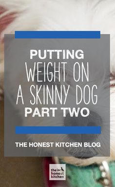 If you're having trouble keeping weight on your dog, you're not alone. Check out these awesome ideas for adding weight to your skinny pup!  #THK #honestkitchen #TheHonestKitchen #dog #dogs #pet #health #weight #training #diet