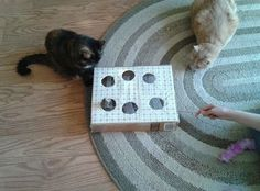 Jeux pour chat avec une boite Snoopy, Cats, Diy, Animals, Charlotte, New York, Kittens, Homemade, Cute Funny Animals