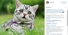 Move over, Grumpy Cat! Luhu, the perpetually gloomy-looking kitty, is taking over Instagram! >> kiro.tv/SadKitty