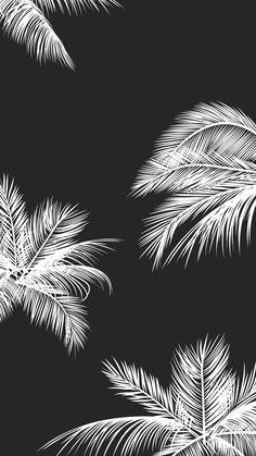 Black white palm leaves palm trees