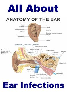 While Ear Infections are more common in children, adults can get them too. Types of infections. Home Remedies.