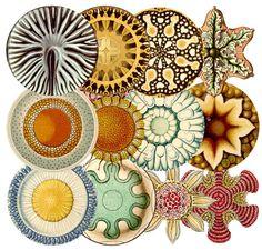 Image result for Ernst Heinrich Philipp August Haeckel
