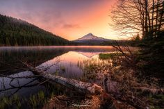 Trillium Chopped Down by Eamon Gallagher on 500px